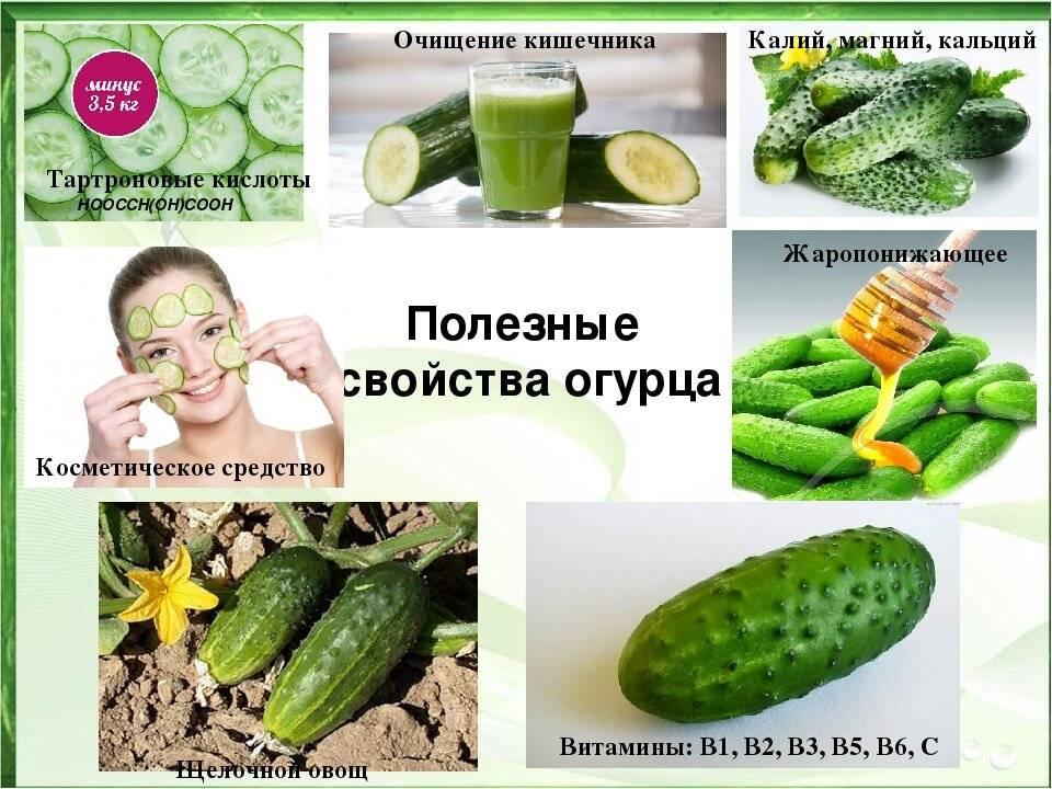 Полезные свойства и вред огурцов для организма человека