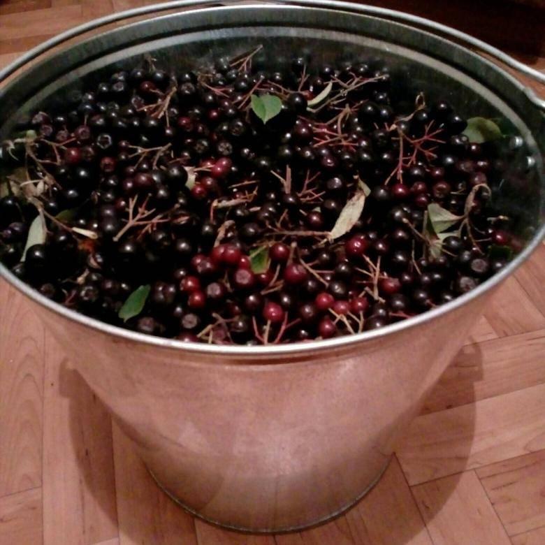 Как заготовить рябину (аронию) черноплодную на зиму