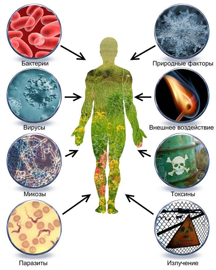 Грибы: польза и вред для организма человека