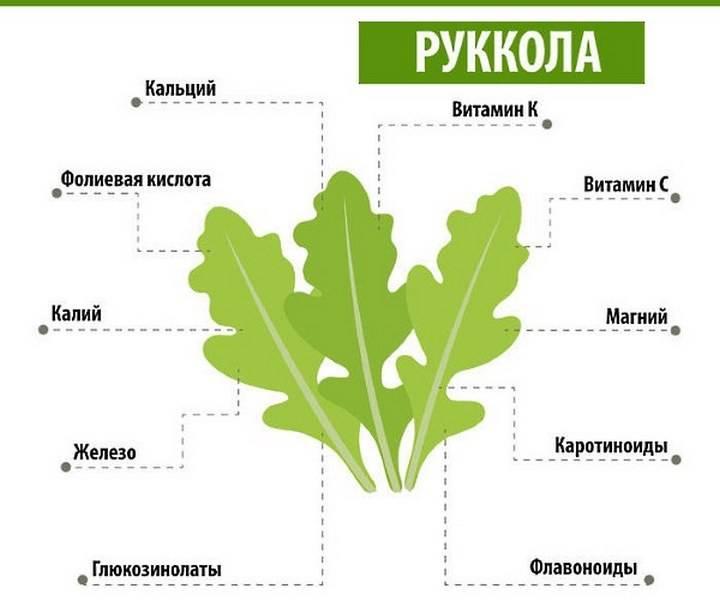 Руккола— универсальный кладезь витаминов: польза для здоровья,противопоказания и вред