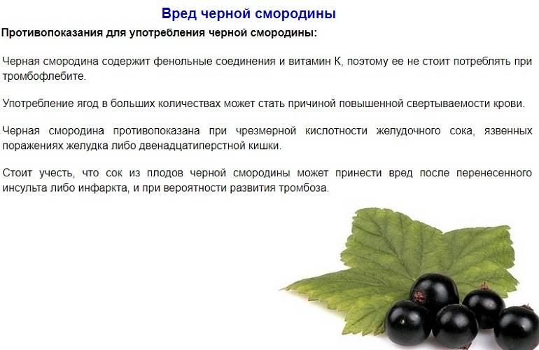 Полезные свойства листьев смородины: применение в народной медицине, косметологии и кулинарии