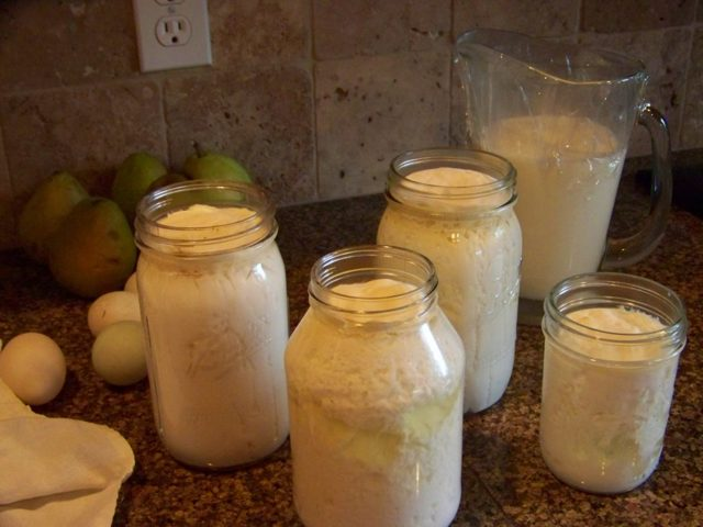 Что полезнее для здоровья молоко или простокваша