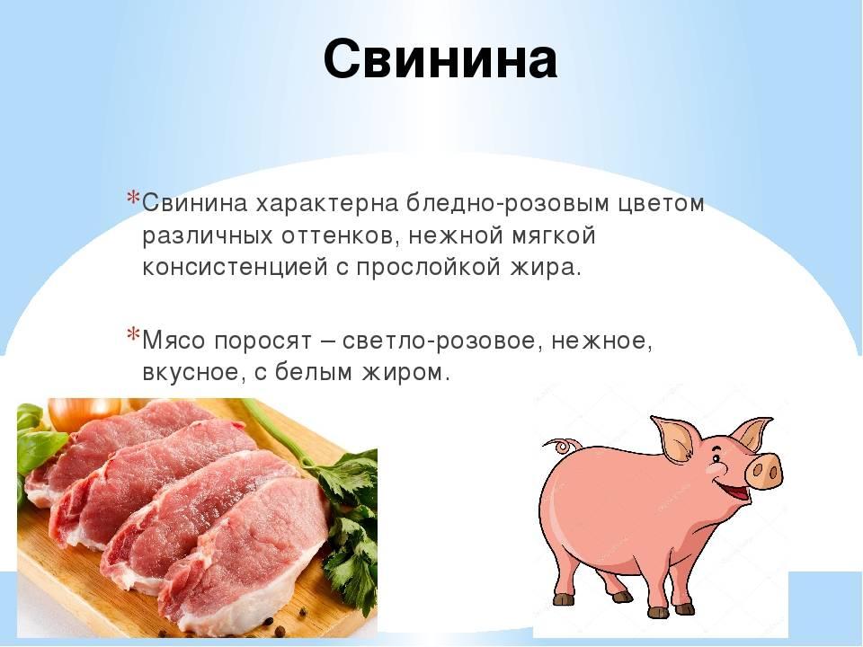 Свинина, состав, польза и вред свинины