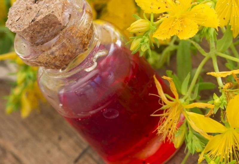 Чай из зверобоя польза и вред как заваривать и пить
