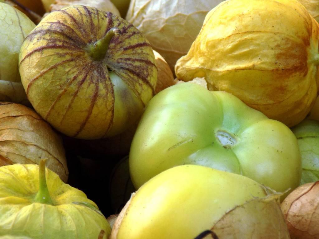 Что такое физалис и как его едят, каковы польза и вред
