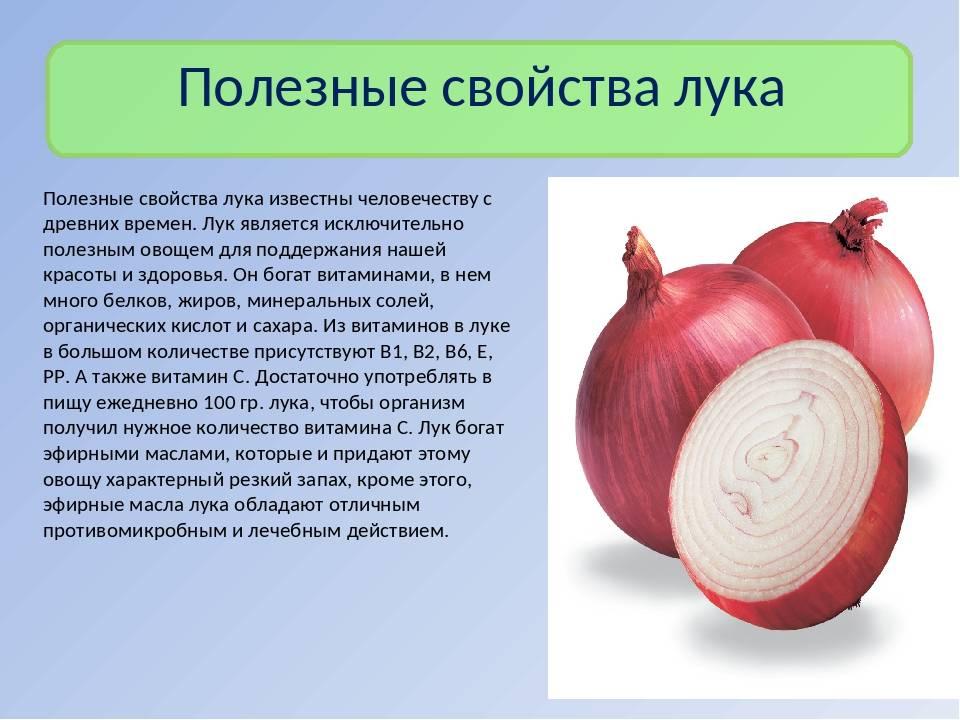 Лук репчатый: польза и вред для организма человека