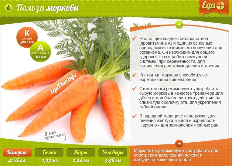 Чем полезна морковь, лечебные свойства и противопоказания