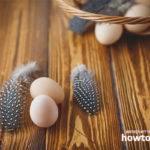 Полезные свойства и противопоказания яиц цесарки