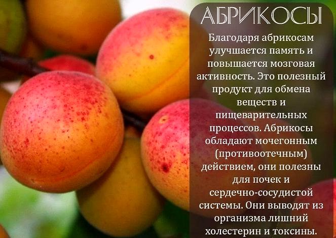 Абрикосы - польза и вред для здоровья человека