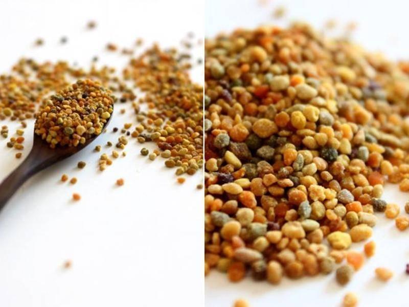 Пчелиная пыльца (перга) – что это за продукт и его преимущества