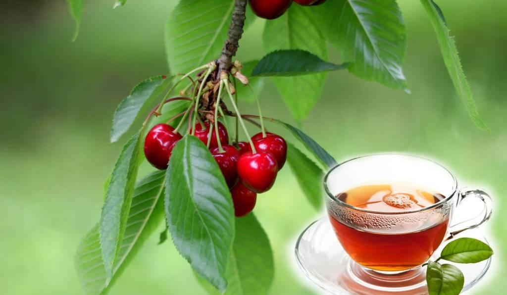 Чем полезна вишня — 8 научных фактов о влиянии на здоровье человека