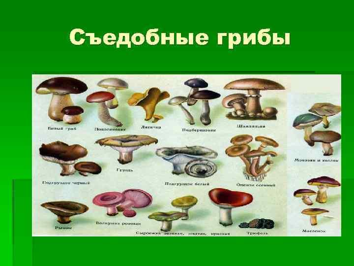 Тревожные признаки наличия грибков в организме: что делать