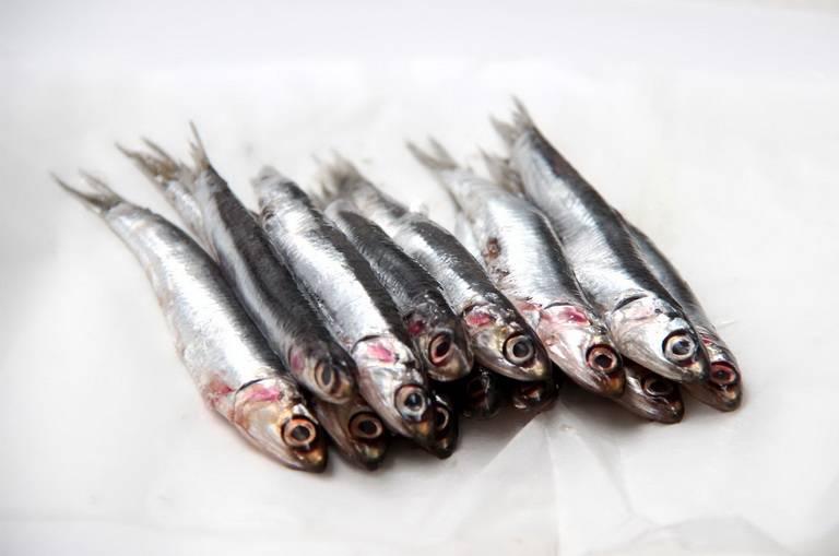 Скромная рыбка хамса: польза и вред для организма + способы приготовления