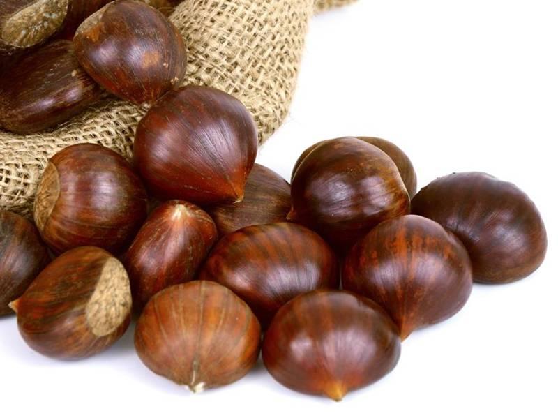 Каштаны — польза и вред ореха-долгожителя