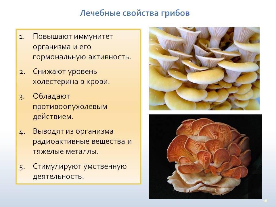 Грибы грузди: польза или вред для организма человека