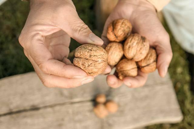 5 самых полезных орехов для организма человека