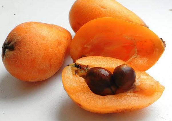 Мушмула: польза и вред экзотического фрукта