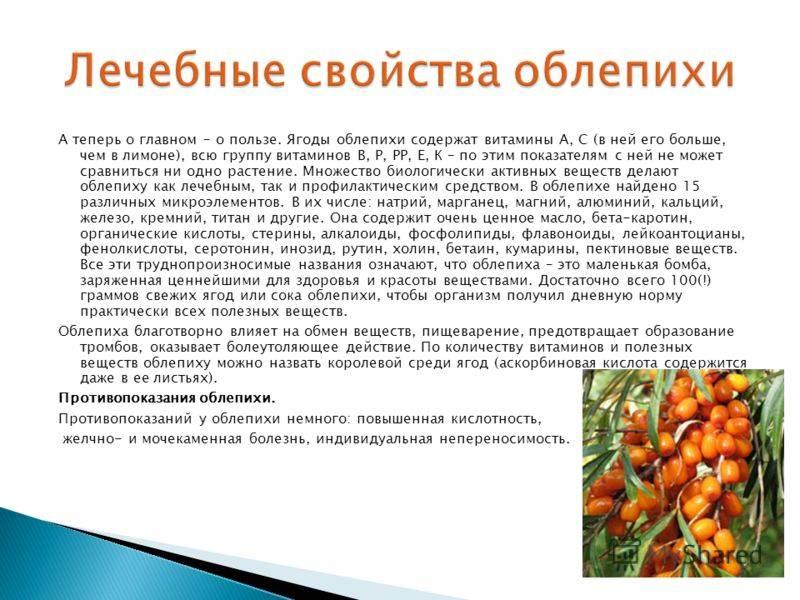 Листья облепихи: лечебные свойства и противопоказания, полезные свойства
