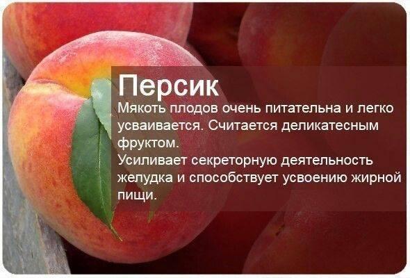 Польза и вред персика для организма человека