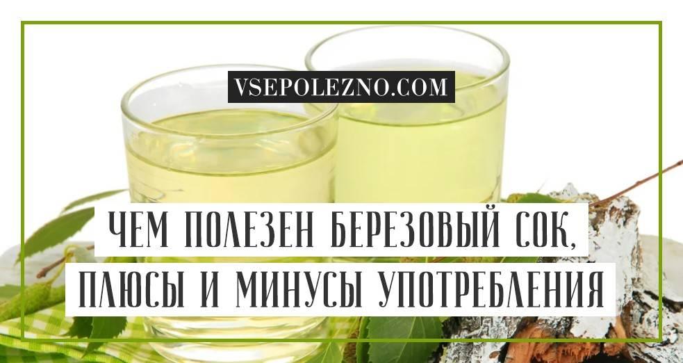 Березовый сок: польза и вред, правила сбора, хранение и консервация