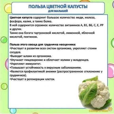 Польза и вред от различных видов цветной капусты
