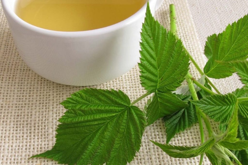 Польза чая из листьев малины для женщин, в том числе при беременности