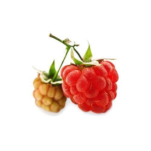 Княженика — описание пользы и вреда, а также лечебных свойств этой ягоды