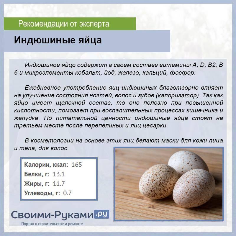 Яйца индейки польза и вред