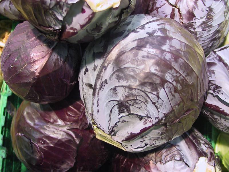 Польза и вред краснокочанной капусты для организма