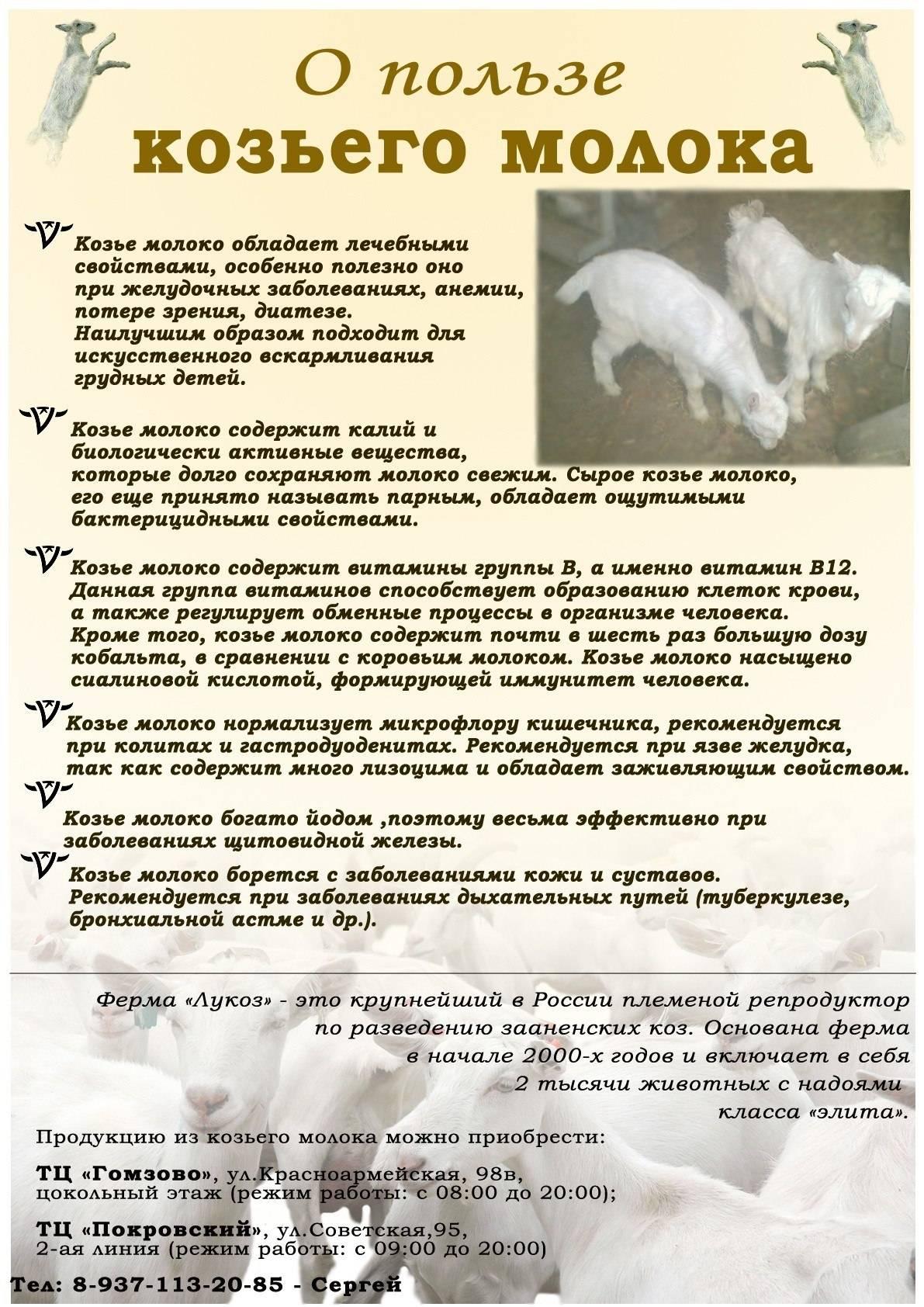 Козье молоко: польза и вред для здоровья, долголетия и красоты