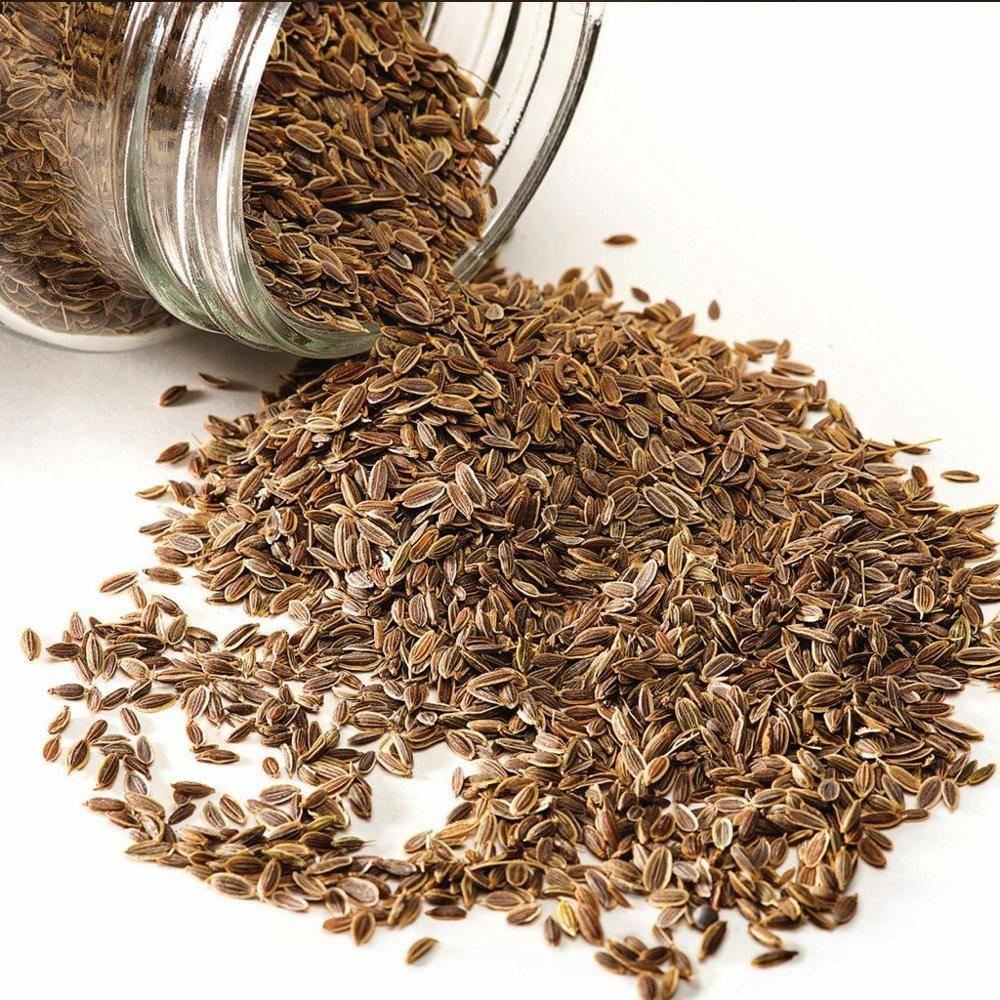 Семена укропа: полезные свойства, противопоказания, польза и вред