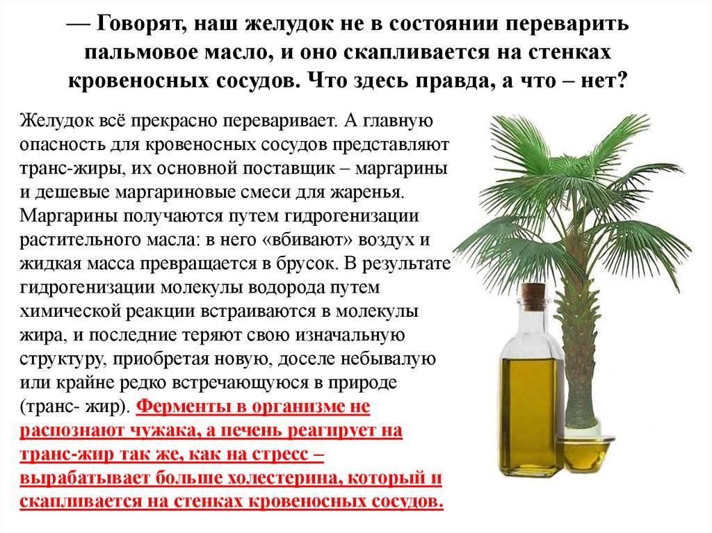 Пальмовое масло: вред и польза для организма