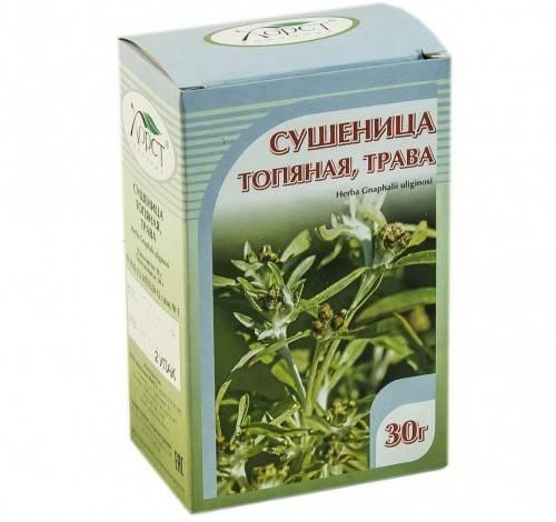 Сушеница топяная (болотная), ее лечебные свойства и противопоказания