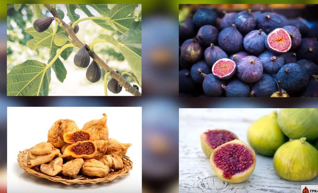 Инжир сушеный: польза и вред