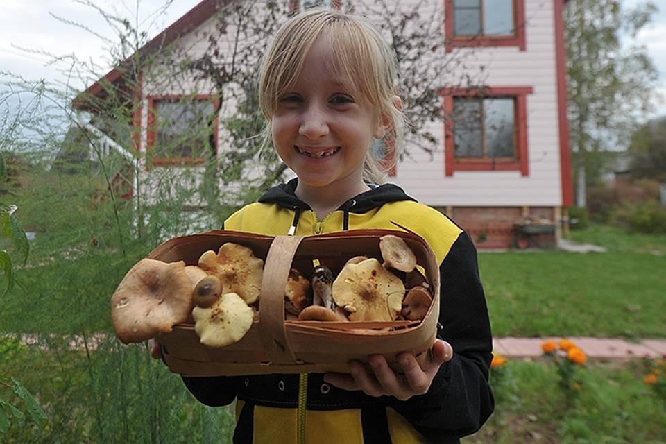 Польза и вред белых грибов для организма