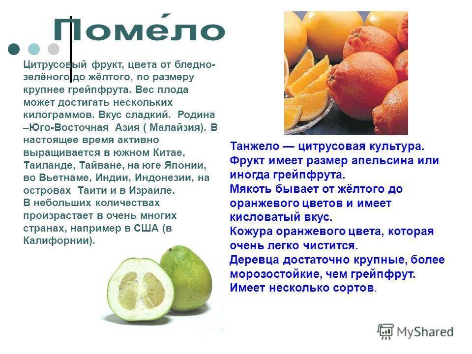 Польза помело — обзор свойств и полезных элементов в составе фрукта. 105 фото и видео хранения и употребления
