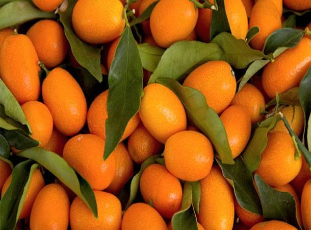 Польза и вред кумквата для здоровья — описание, состав, калорийность и противопоказания фрукта (95 фото)