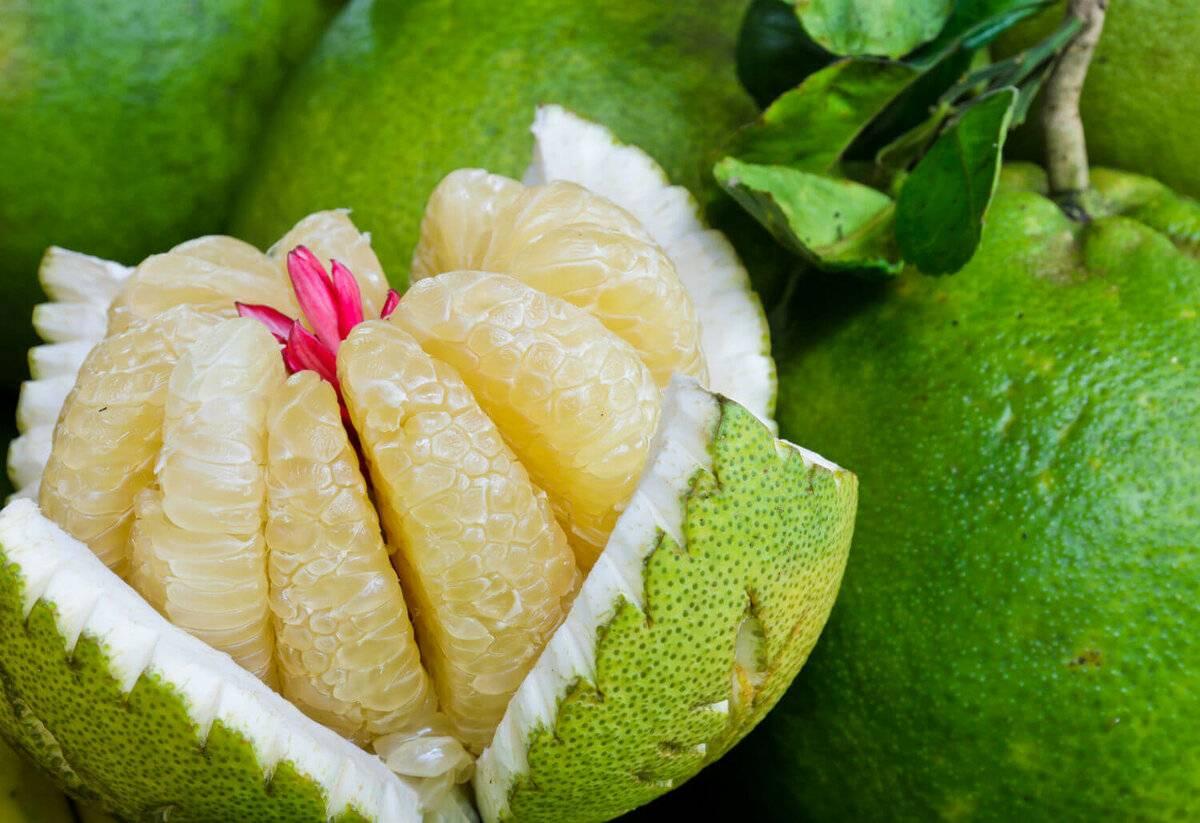 Цитрус свити: что это за фрукт и почему мы его любим больше апельсина?