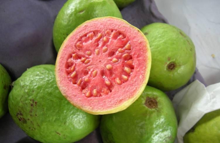 Растение гуава полезные и опасные для организма человека свойства