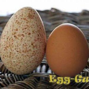 Яйцо индюшиное