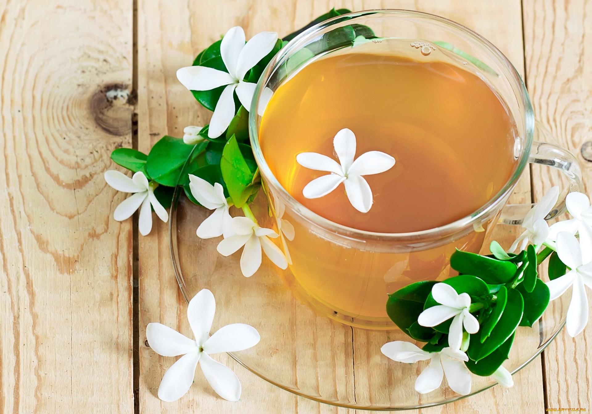 Жасминовый чай — польза и вред для здоровья