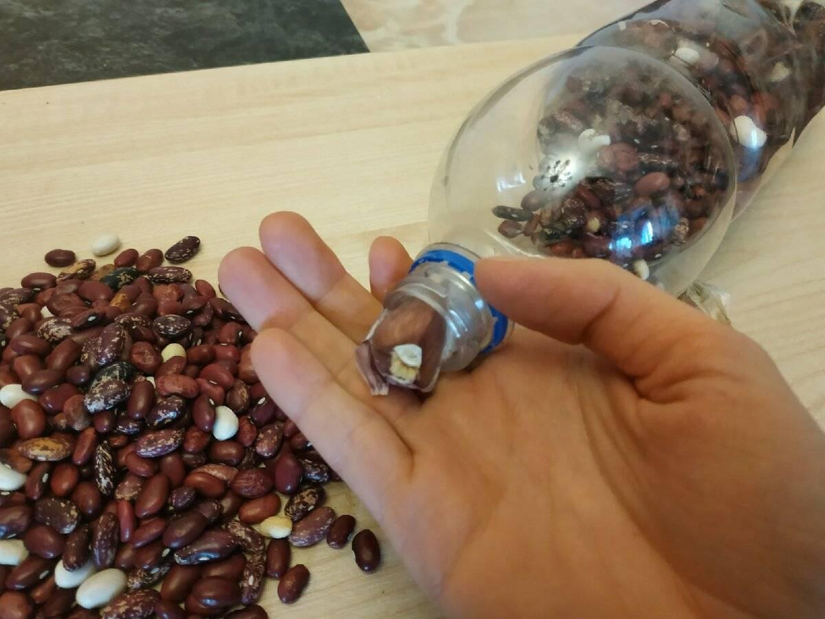 Как хранить фасоль, чтобы не завелись жучки: правила хранения зимой