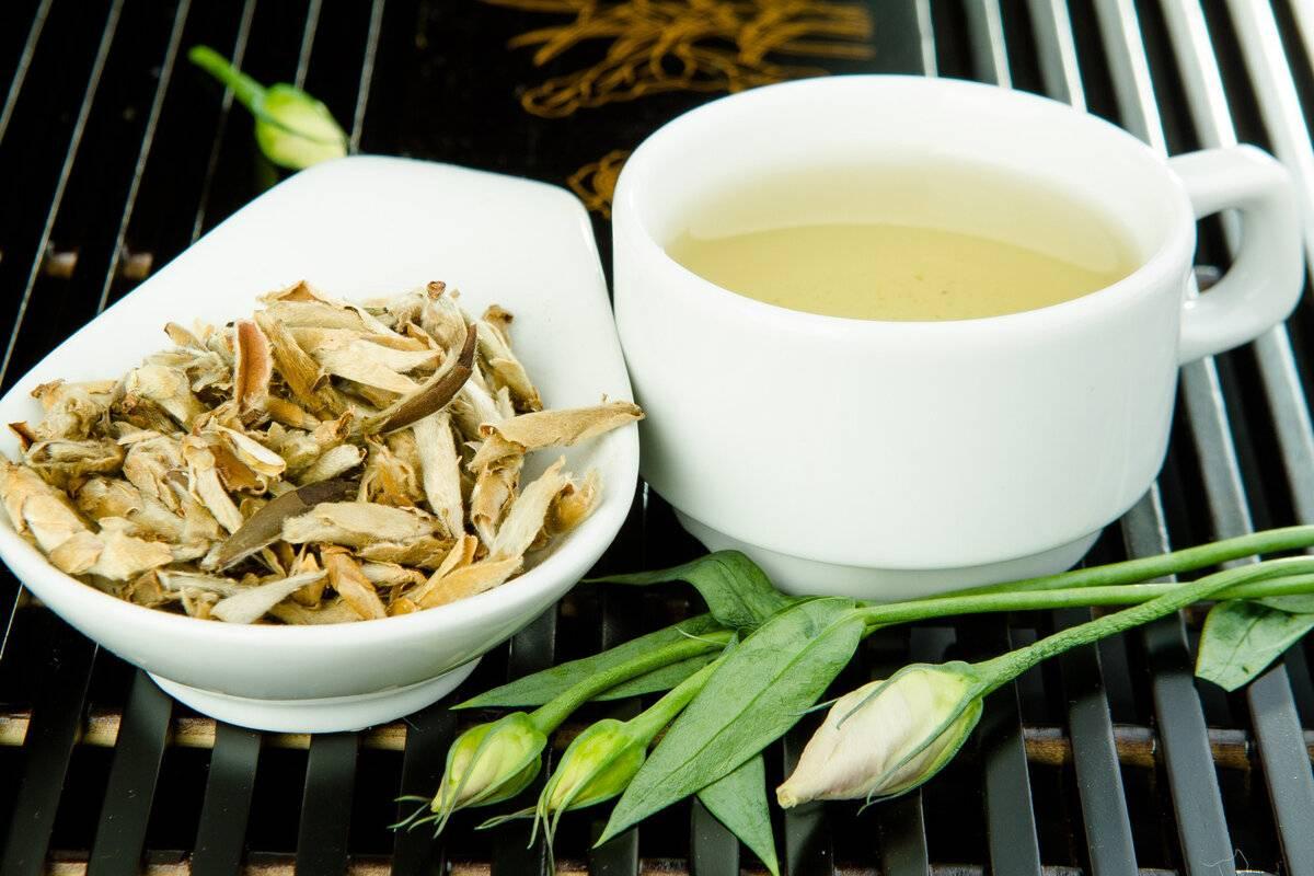 Белый чай. польза и вред. свойства