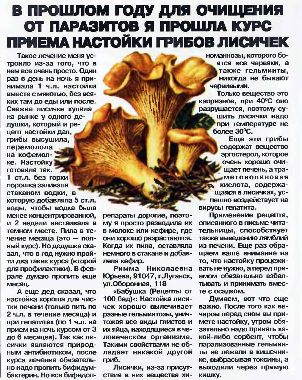 Полезные свойства и противопоказания лисичек в народной медицине