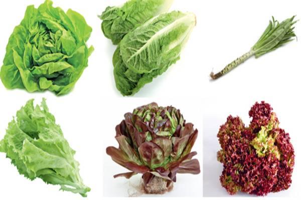 Салат листовой польза и вред для здоровья