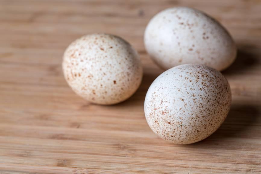 Яйца домашней цесарки: польза и вред