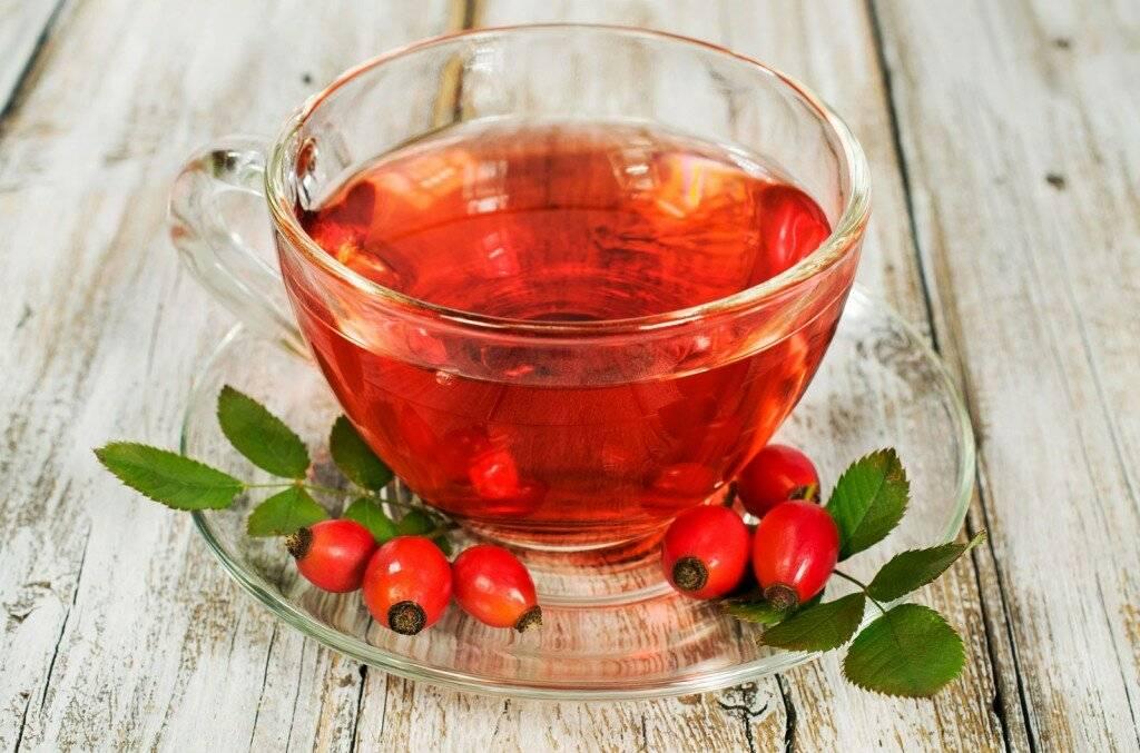 Польза и вред ягоды калины. народные средства лечения калиной. косточки калины – польза и вред для здоровья