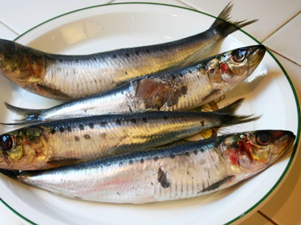 Сардины в масле: польза и вред