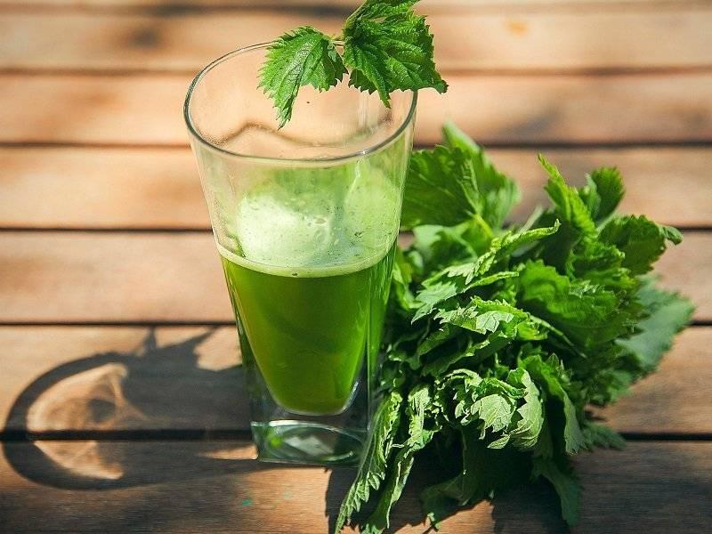 Чай из крапивы — польза и вред для здоровья