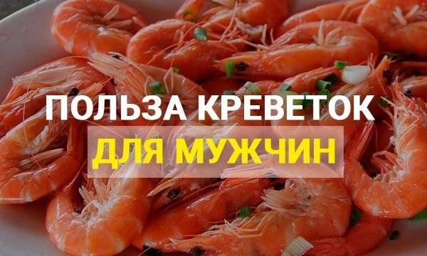 Креветки: польза и вред морепродуктов для здоровья человека